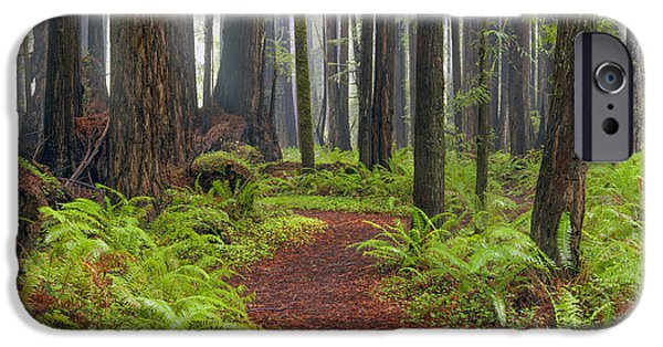 Mist iPhone Cases - Walk in the Woods 2 iPhone Case by Leland D Howard