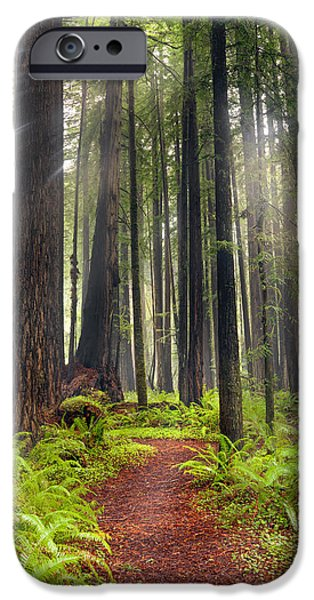 Mist iPhone Cases - Walk in the Woods iPhone Case by Leland D Howard