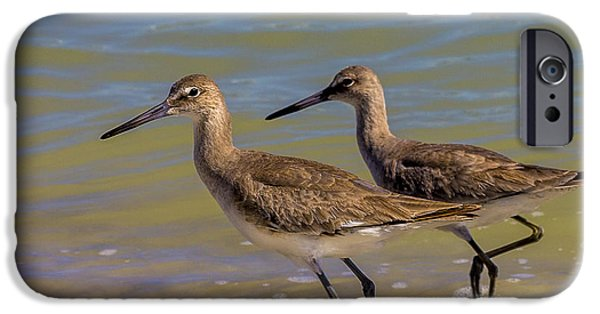 Sea Birds Photographs iPhone Cases - Walk Together Stay Together iPhone Case by Marvin Spates