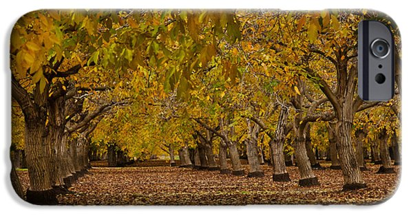 Recently Sold -  - Agriculture iPhone Cases - Walnut Orchard iPhone Case by Ron Sanford
