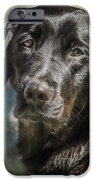 Black Dog iPhone Cases - Wanda iPhone Case by Eleanor Abramson