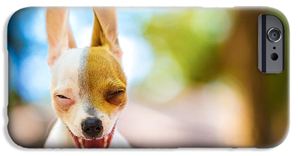 Cute Puppy Photographs iPhone Cases - Wassup? iPhone Case by TC Morgan