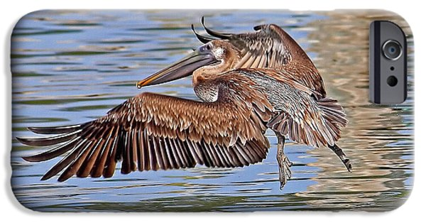 Flight iPhone Cases - Water Ballet - Brown Pelican iPhone Case by HH Photography of Florida