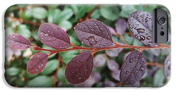 Overhang iPhone Cases - Water droplets on purplish red leaves iPhone Case by Kathleen Wong
