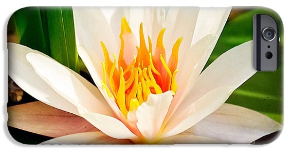 Crops iPhone Cases - Water Lilies 02 iPhone Case by Ingrid Smith-Johnsen
