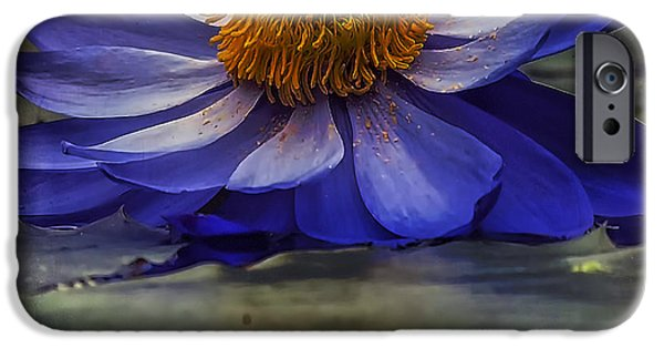 Crops iPhone Cases - Water Lily 2 iPhone Case by Ingrid Smith-Johnsen