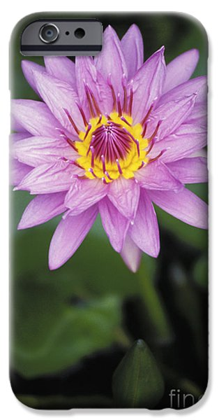 Meadow Photographs iPhone Cases - Water Lily iPhone Case by Allan Seiden - Printscapes