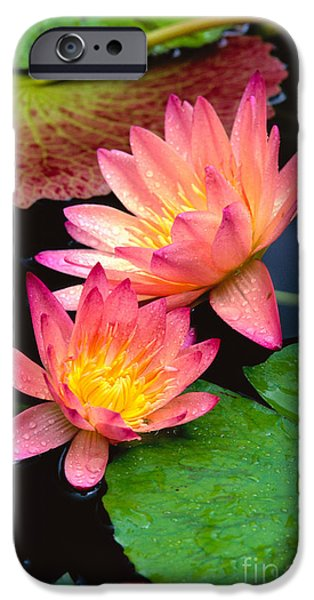Recently Sold -  - Nature Center Pond iPhone Cases - Water Lily iPhone Case by Bill Brennan - Printscapes