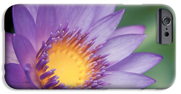 Poetic iPhone Cases - Water Lily Nymphaea nouchali Star Lotus iPhone Case by Sharon Mau
