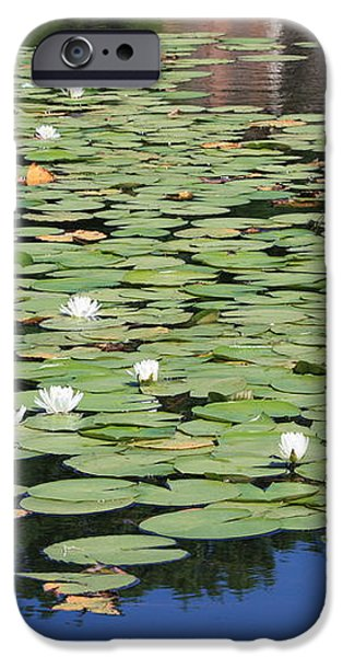 Water Lily Pond iPhone Case by Carol Groenen