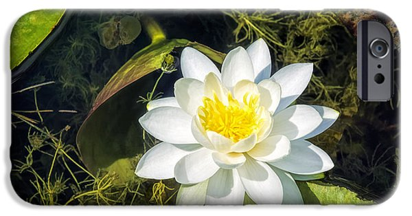 Independance Day iPhone Cases - Water Lily Pond iPhone Case by LeeAnn McLaneGoetz McLaneGoetzStudioLLCcom