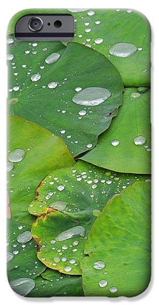 Waterdrops on lotus leaves iPhone Case by Silke Magino