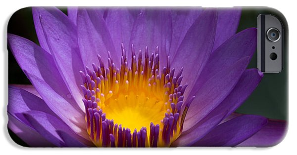 Blooming Pyrography iPhone Cases - Waterlilly iPhone Case by Peteris Vaivars