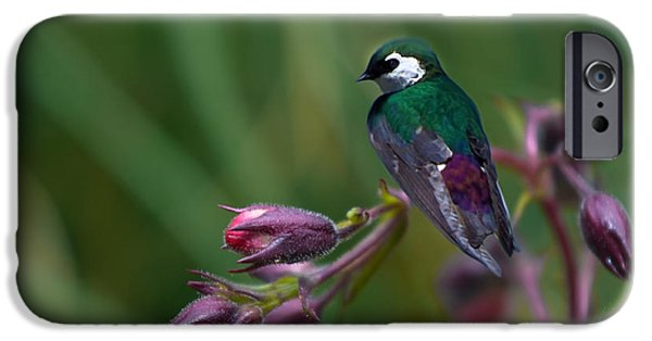 Barn Swallow iPhone Cases - Wavey Perch iPhone Case by Adria Trail