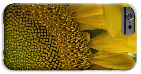 Crops iPhone Cases - Waving Goodbye To Summer iPhone Case by Janice Rae Pariza