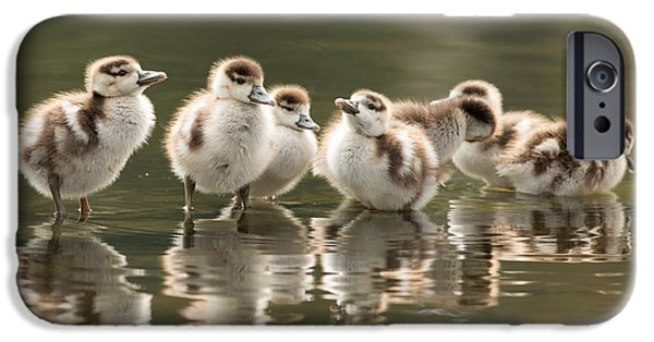 Cute Bird iPhone Cases - We Are Family - Seven Egytean Goslings in a Row iPhone Case by Roeselien Raimond