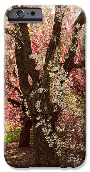 Weeping iPhone Cases - Weeping Cherry Panel iPhone Case by Jessica Jenney