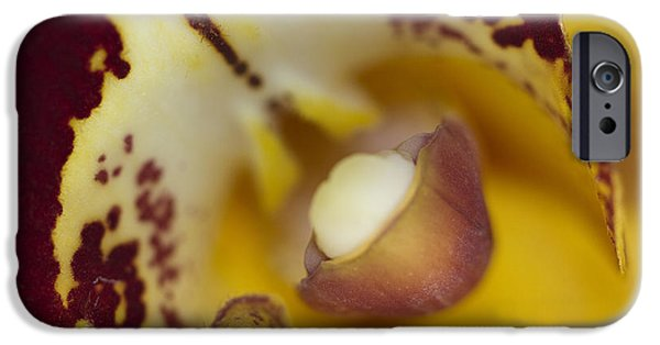 Orchid iPhone Cases - Welcome iPhone Case by Rebecca Cozart