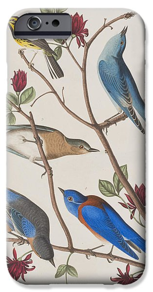 Audubon iPhone Cases - Western Blue-bird iPhone Case by John James Audubon