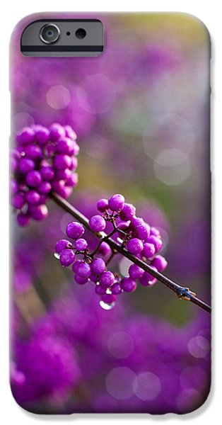 Berry iPhone Cases - Wet Purple 2 iPhone Case by Mike Reid