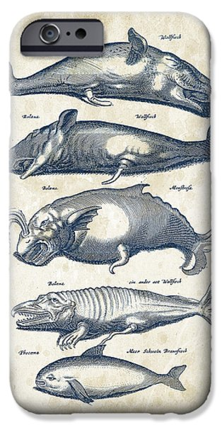 Dolphin iPhone Cases - Whale Historiae Naturalis 08 - 1657 - 41 iPhone Case by Aged Pixel