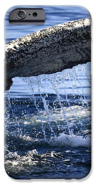Whale Tail iPhone Case by Dapixara Art