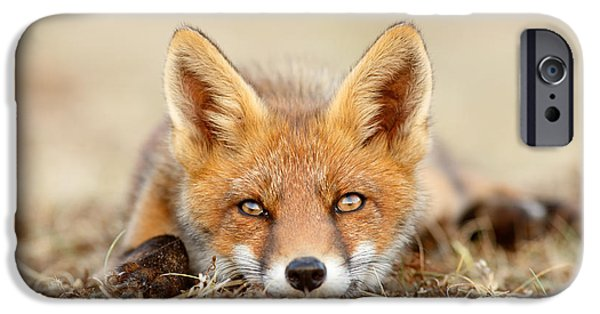 Fox Kit iPhone Cases - What Does the Fox Think? iPhone Case by Roeselien Raimond