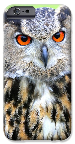 Recently Sold -  - Drama iPhone Cases - What does the Owl say           who who who iPhone Case by Marlana Holsten