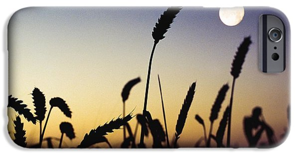 Simple Beauty In Colors iPhone Cases - Wheat Field, Ireland Wheat Field And iPhone Case by The Irish Image Collection