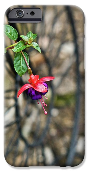 Wheel and Fushia Blossom iPhone Case by Douglas Barnett