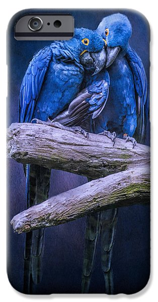 Birds iPhone Cases - When Im Feeling Blue iPhone Case by Brian Tarr