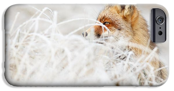 Red Eye iPhone Cases - Which Fox....Where? iPhone Case by Roeselien Raimond