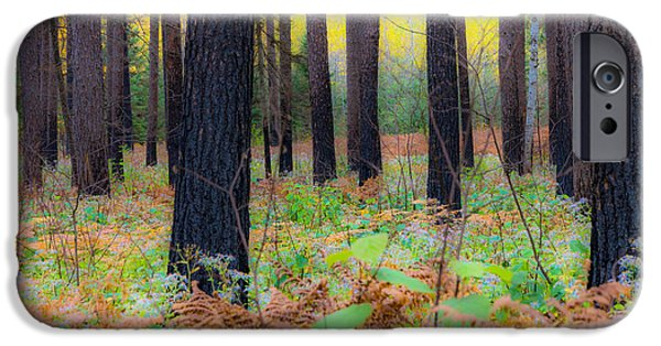 iPhone Cases - Whispering Woods iPhone Case by Mary Amerman