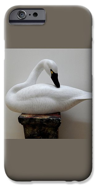 Whistling Tundra Swan Preening iPhone Case by Robert G Kerr