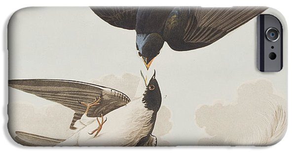 Swallow iPhone Cases - White-bellied Swallow iPhone Case by John James Audubon
