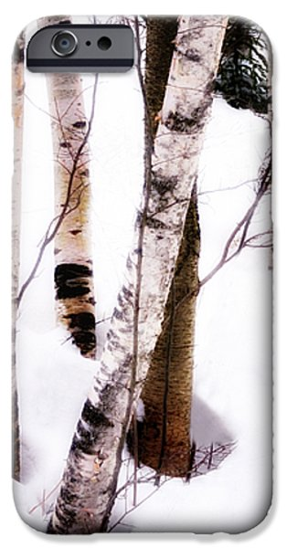 White Birch Trunks - Winter Fine Art Nature  iPhone Case by Thomas Schoeller