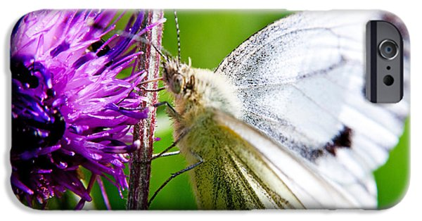 Nature Scene iPhone Cases - White Cabbage Butterfly Pieris rapae on Purple Thistle Flower iPhone Case by Chris Smith