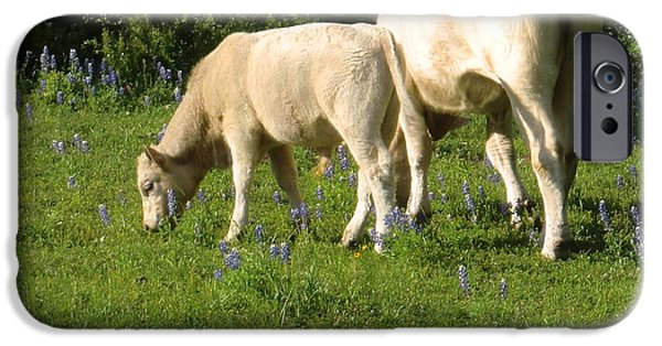 Young iPhone Cases - White Calf with mom eating Spring Grass iPhone Case by Victoria Beasley