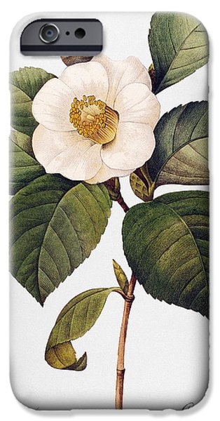 WHITE CAMELLIA iPhone Case by Granger