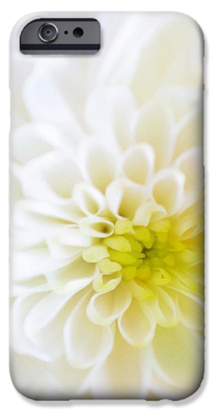 Pastel iPhone Cases - White Chrysanthemum iPhone Case by Cynthia Decker