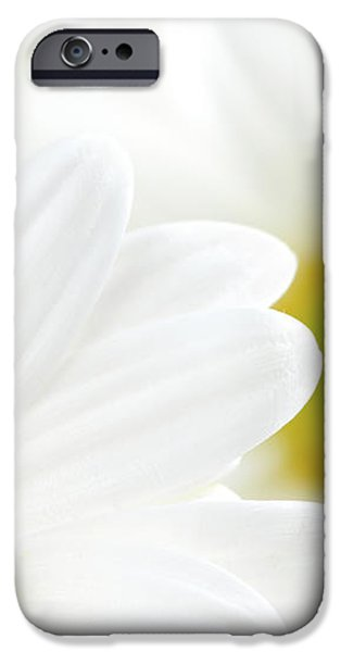 White daisies iPhone Case by Elena Elisseeva