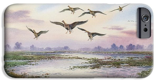 Geese iPhone Cases - White-Fronted Geese Alighting iPhone Case by Carl Donner