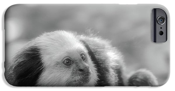 Greyscale iPhone Cases - White-headed Marmoset iPhone Case by Wim Lanclus
