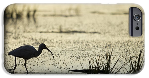 Incoming Tide iPhone Cases - White Ibis Morning Hunt iPhone Case by Dustin K Ryan