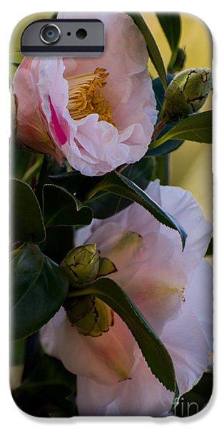 Tree Art Print iPhone Cases - White Japanese camellia iPhone Case by Zina Stromberg