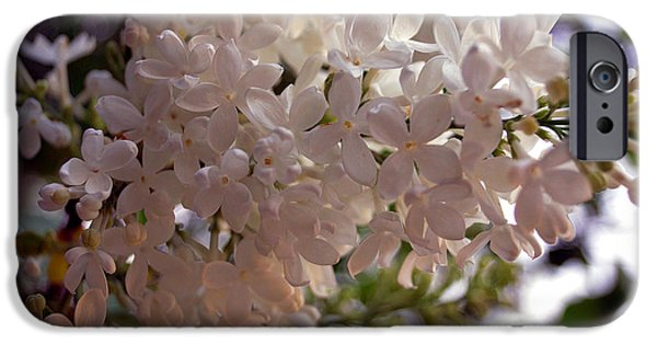 Norway iPhone Cases - White Lilac iPhone Case by Lana Art