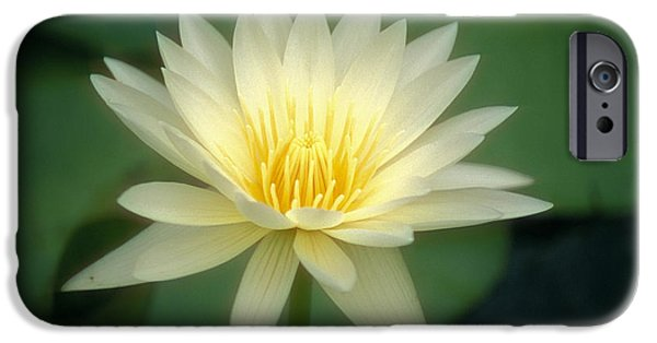 Recently Sold -  - Nature Center Pond iPhone Cases - White Lily iPhone Case by Ron Dahlquist - Printscapes