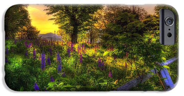 Flora iPhone Cases - White Mountain Sunrise over Lupines iPhone Case by Joann Vitali