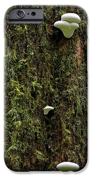 White Mushrooms - Quinault temperate rain forest - Olympic Peninsula WA iPhone Case by Christine Till