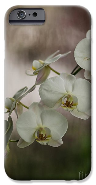 Orchid iPhone Cases - White of the Evening iPhone Case by Mike Reid